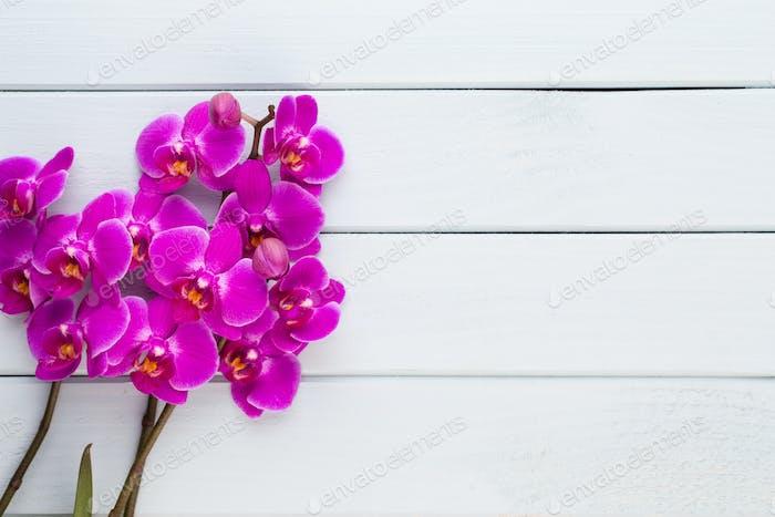 Орхидея красоты на белом фоне.