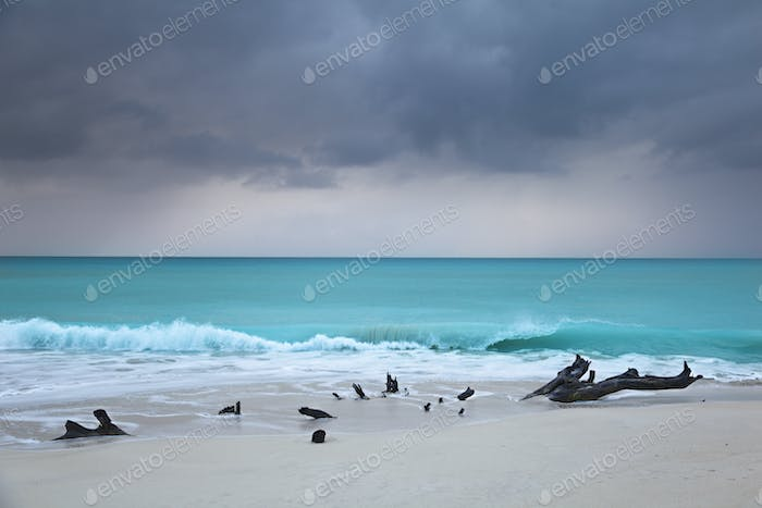 Caribbean Beach Driftwood With Dramatic Sky, Antigua