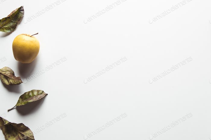 Yellow apples on a white background with old leaves, wholesome food, farming, vegetarian