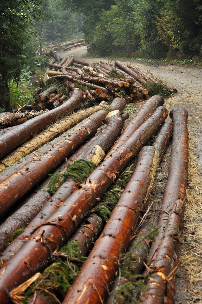 Tree logs piled up near a forest road. Deforestation concept