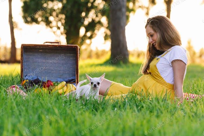 Young pregnant girl at a picnic at sunset. With chihuahua dog