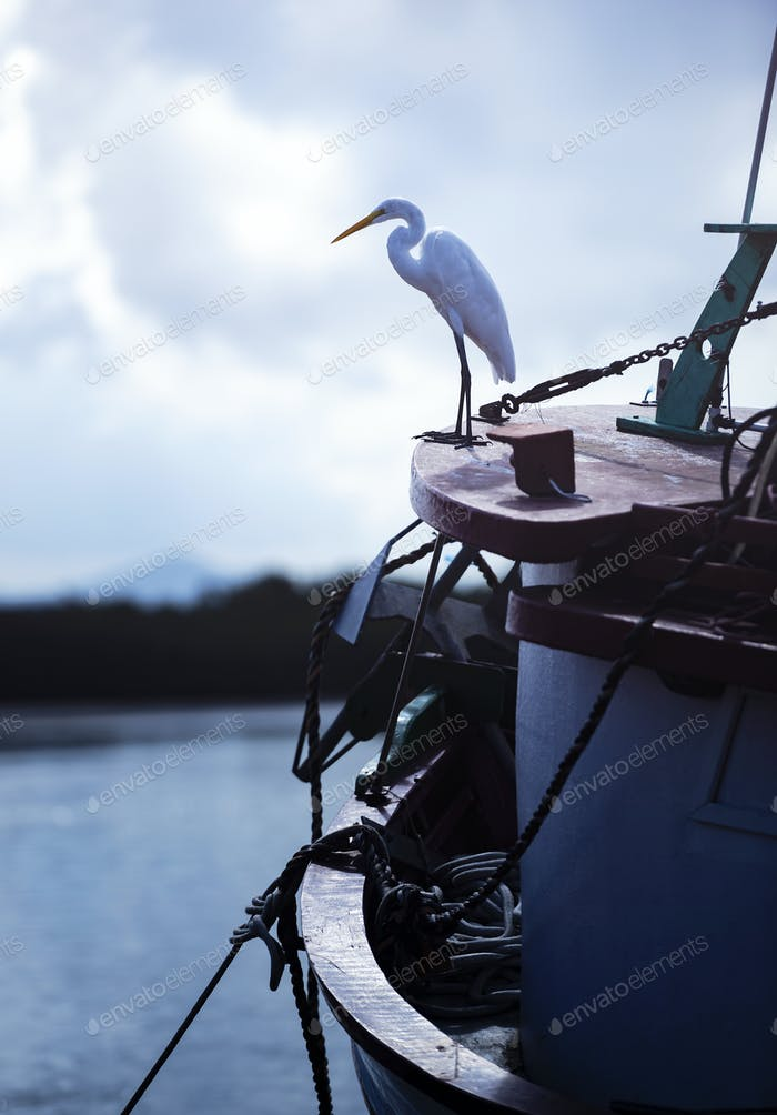 Great Egret On The Boat
