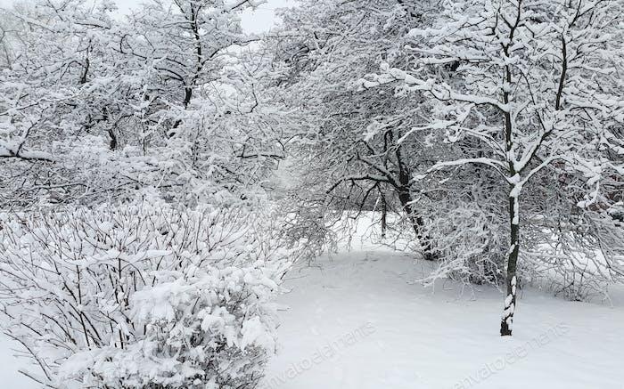 Schöne Winterlandschaft mit Bäumen und Büschen