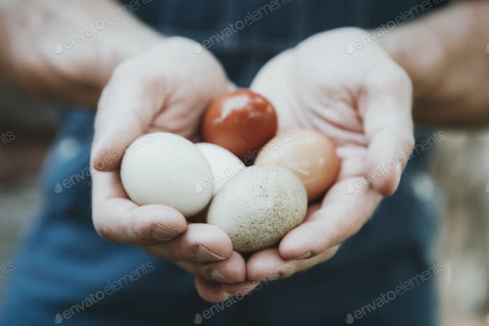 Man Holding Eggs