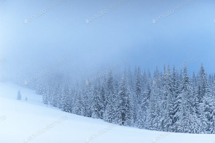Fantastic winter landscape. On the eve of the holiday. The dramatic scene. Carpathian, Ukraine