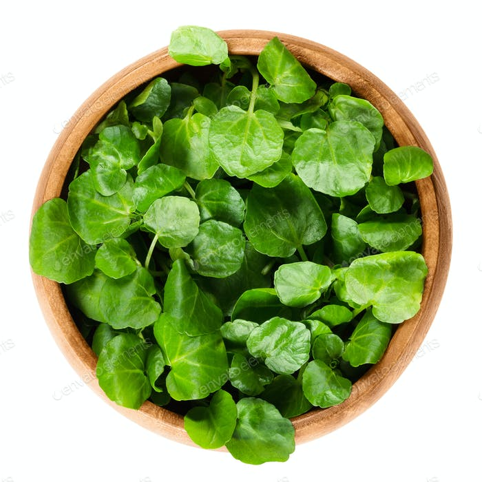 Watercress in wooden bowl over white