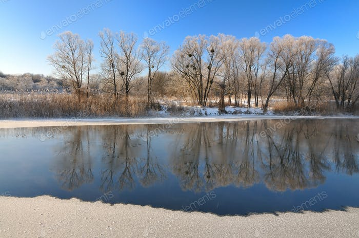 Amazing panorama of deciduous trees