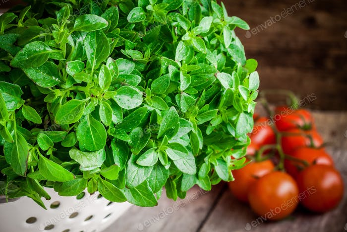fresh organic basil in white colander with cherry tomatoes