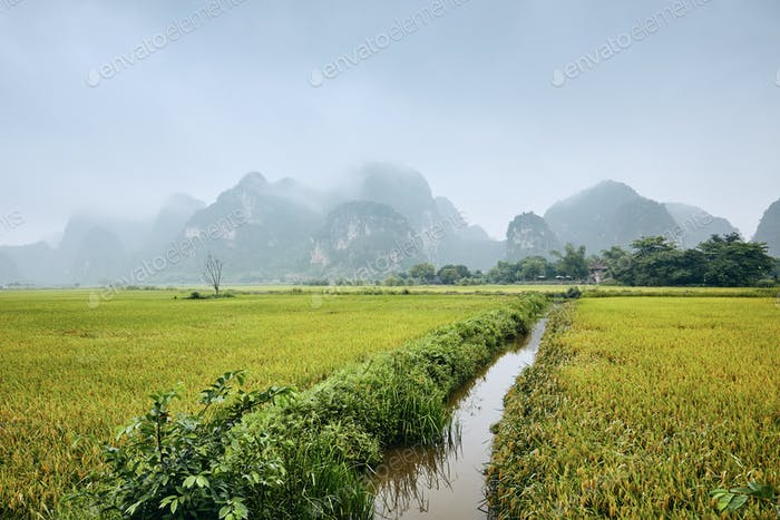 Rice fields against karst mountains