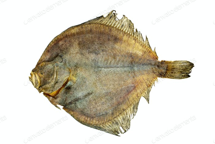 Salted turbot flatfish