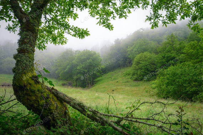 Forests and meadows in the mist in early summer