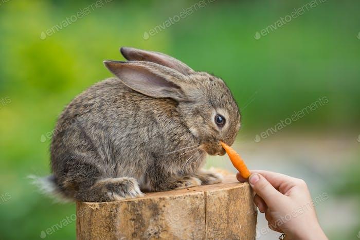 Cute Shy Baby Rabbit. Feeding animal