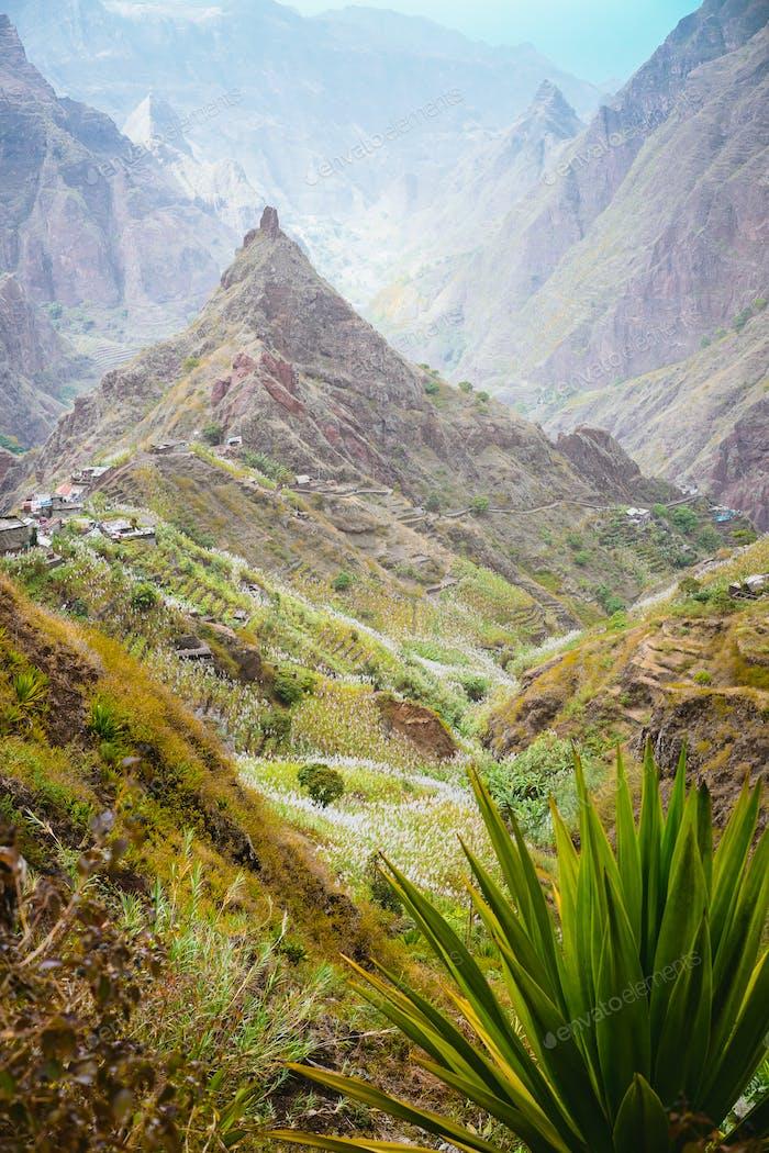 Yucca plants and sugar cane on trekking path way towards mountain peak of Xo-xo valley. Santo Antao