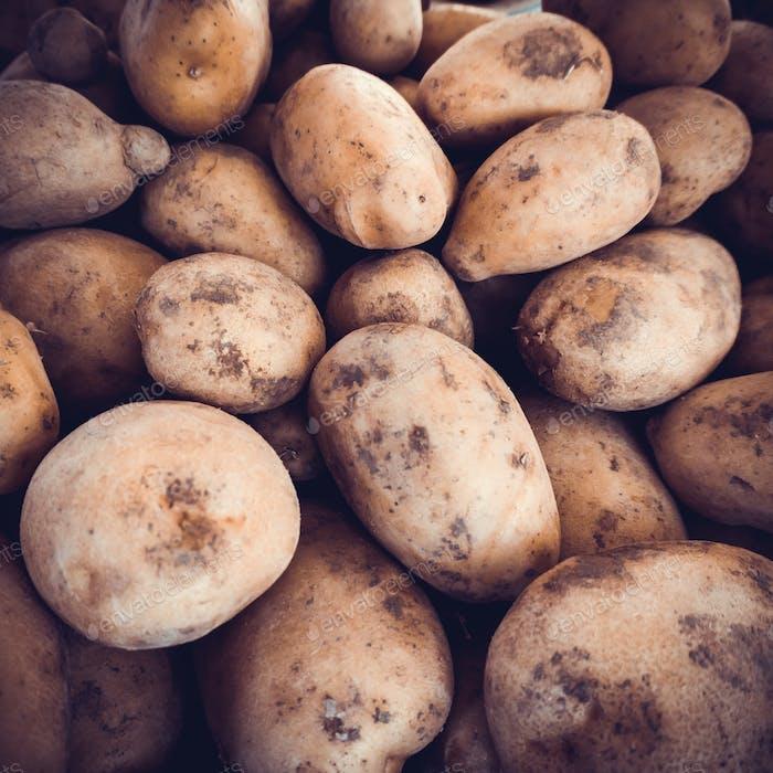 potatoes raw vegetables food.  Fresh organic young potatoes