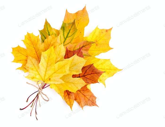 Bouquet of autumn leaves isolated on a white background. Top vie