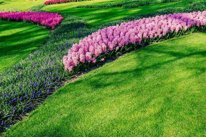 Blumenbeet mit Frühlingsblumen im Park