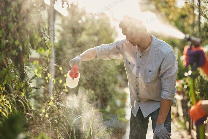 Guy gardener sprays fertilizer on plants in the beautiful nursery-garden on a sunny day. Work in the