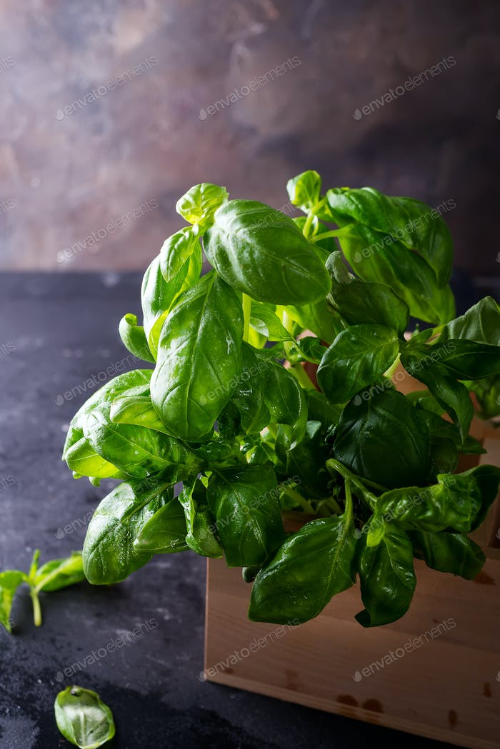 Green fresh basil on stone background