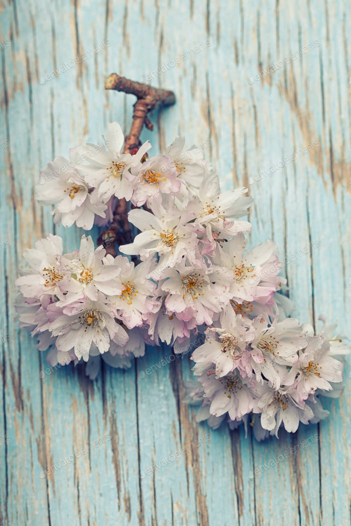 Beautiful spring flowers on a light blue wooden background