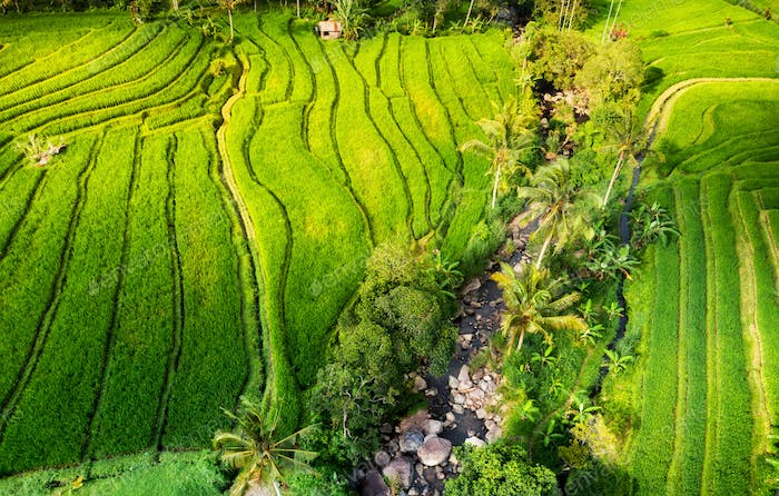 Rice terraces in the summer. Travel and vacation image.