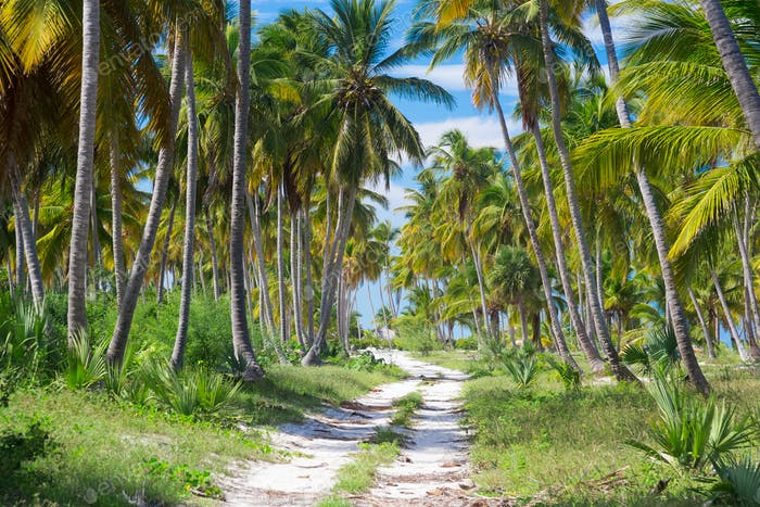 Ground road through the palm trees. Dominican republic