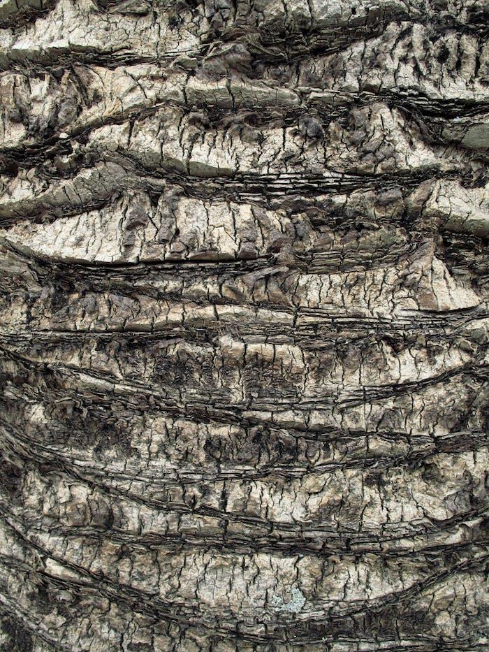 Palm tree trunk close up