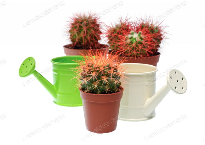 Bunch of cactuses and watering cans