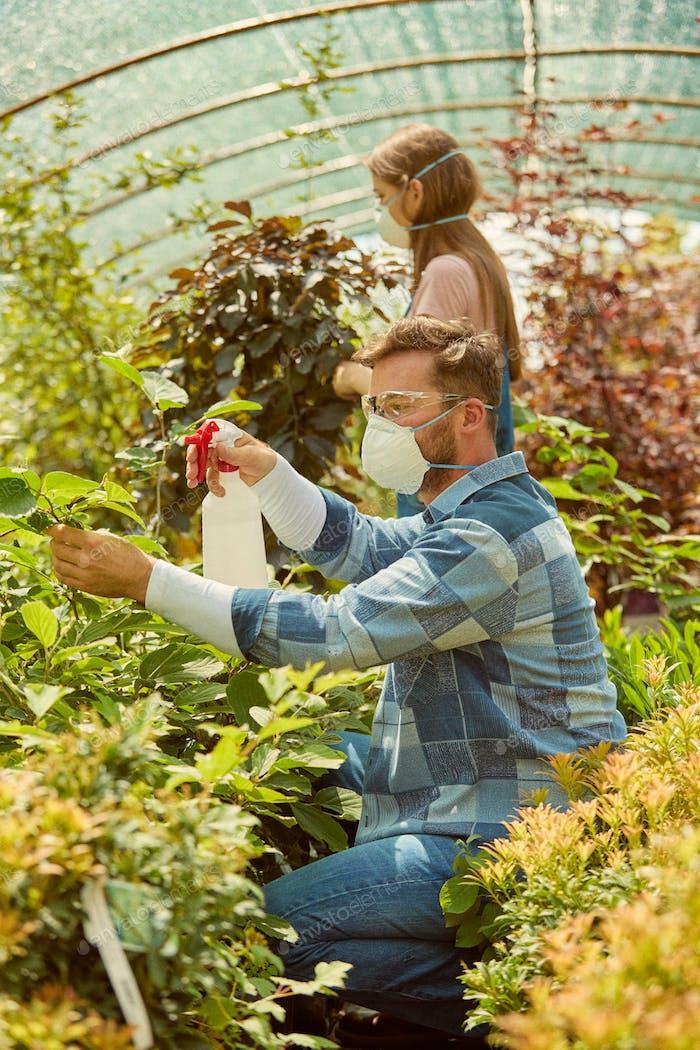 People fertilizing plants in greenhouse