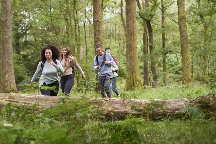 A multi ethnic group of five young adult friends walking in a forest during a hike