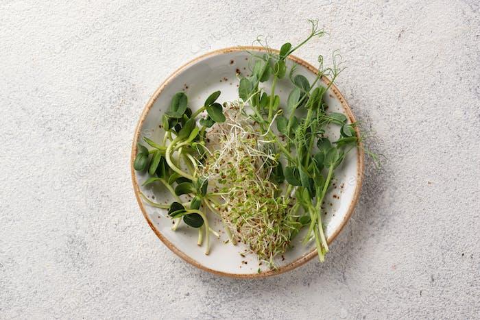 Frische Sorte Micro Greens Sprossen