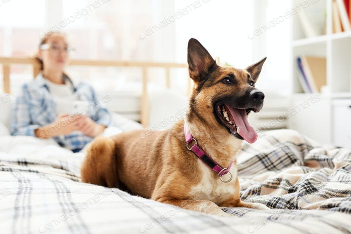 Happy Dog Sitting on Bed
