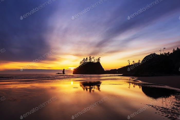 Olympic coast
