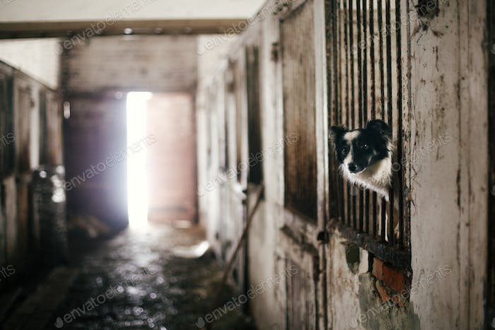 Cute scared dog looking from cage bars at old shelter, waiting for someone to adopt