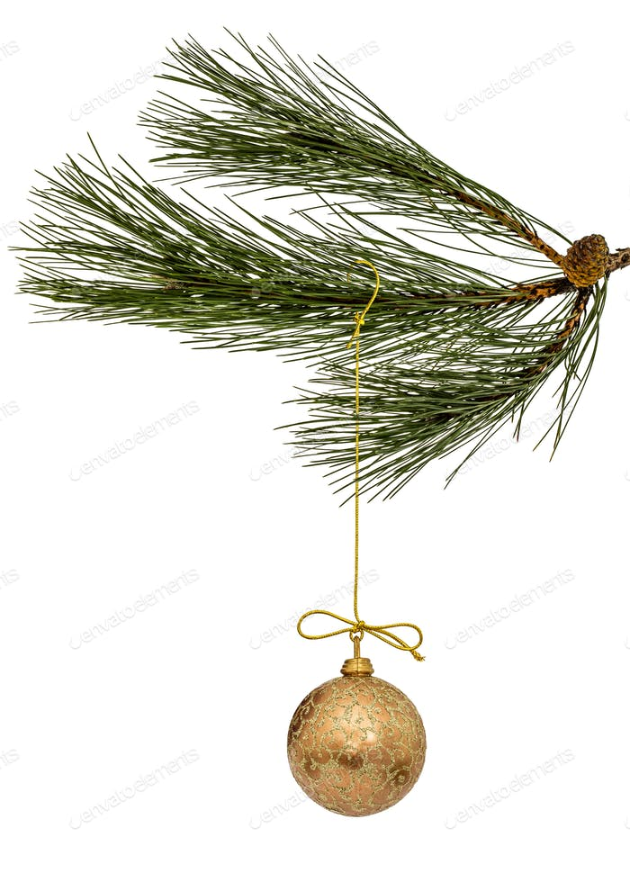 Beautiful Christmas ball hanging on branch of the pine, isolated