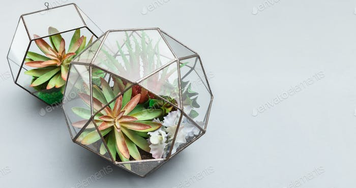 Fashionable geometric florariums with succulent plants, copy space