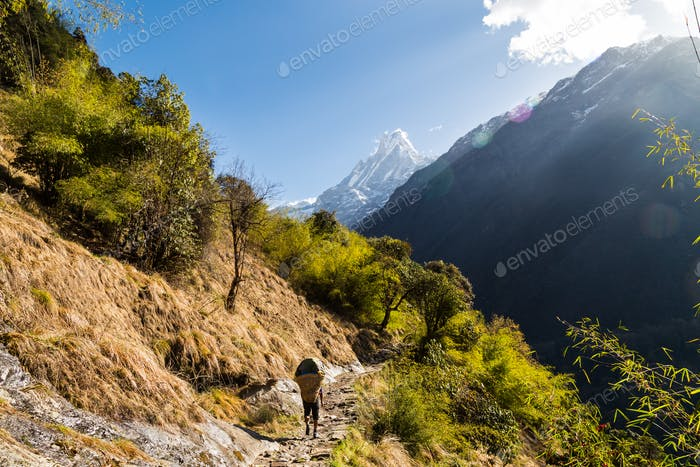 A porter with loads walking a scenic trail towards Mount Machapuchare Nepal