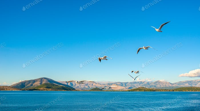 Seagulls flying above Ionian sea.