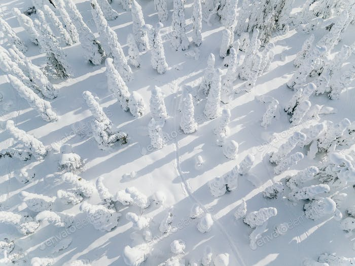 Aerial view of Snow Covered Winter forest landscape in Finland