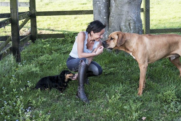 Frau kniend in einem Fahrerlager, gibt Leckereien an zwei Hunde, einem Rhodesian Ridgeback und Dackel.