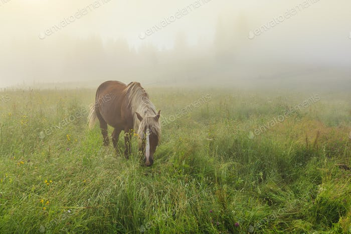 Horse grazing on a beautiful flower misty meadow