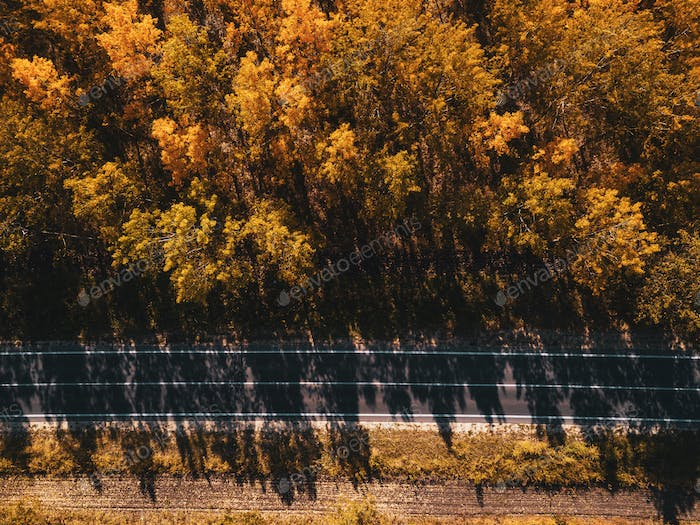 Aerial view of empty road through forest in autumn