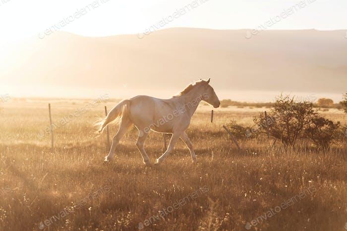 Horse on sunrise