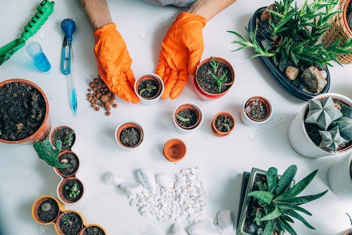 Tisch mit Topfpflanzen zu Hause