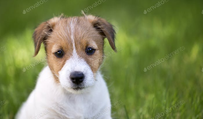 Cute dog puppy looking in the grass
