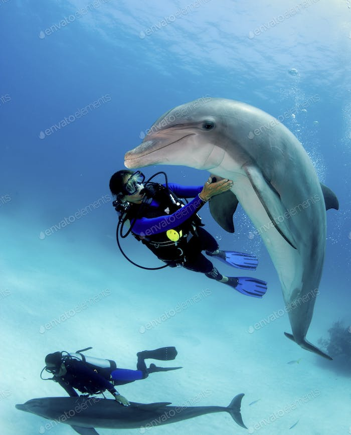 Divers swim and interact with Atlantic bottlenose dolphin, Freeport, Bahamas.,Atlantic bottlenose