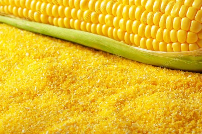 Ripe fresh organic sweet corncob with leaf closeup on grits back