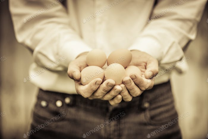 Closeup of Farmer Holding Eggs