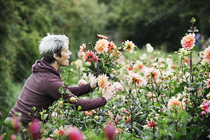 Una mujer cortando flores en un jardín de flores de vivero de plantas Comercial orgánicas.