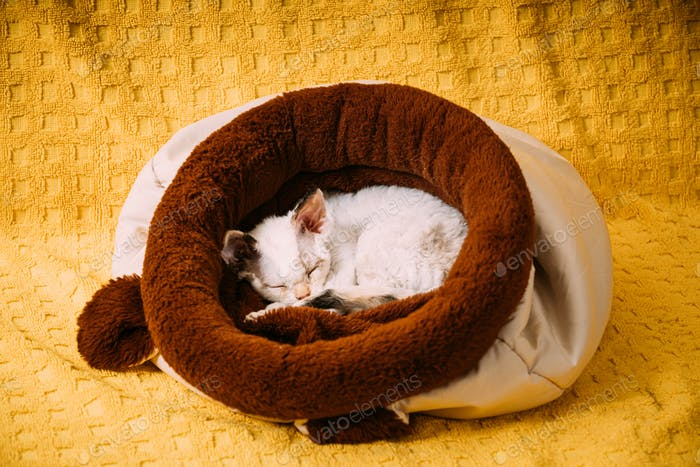 Funny Young Small Little White Devon Rex Kitten Kitty Sleeping Resting In Warm Bag Bed. Short-haired
