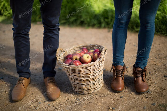 Low section of couple standing by apples in wicker basket on field